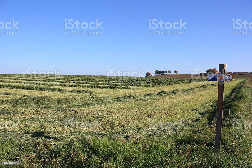 Mown grass on lawn royalty-free stock photo