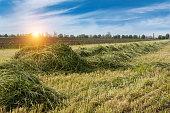 istock Mown green grass field. 1216001527