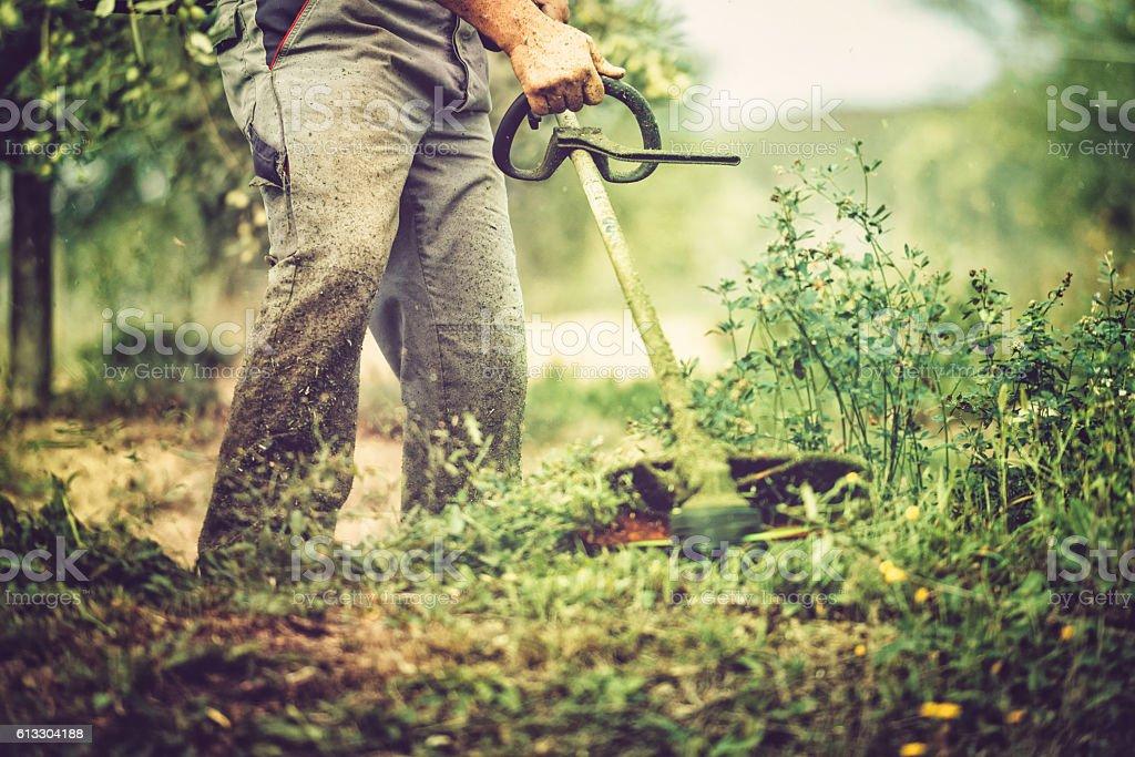 mows the grass - foto de acervo