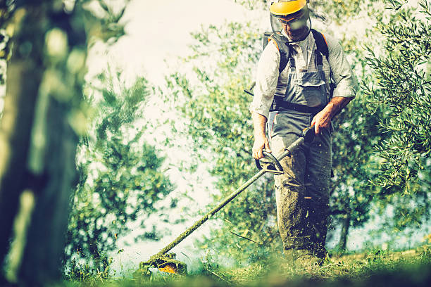 mows the grass Gardener mows with string trimmer. hedge clippers stock pictures, royalty-free photos & images