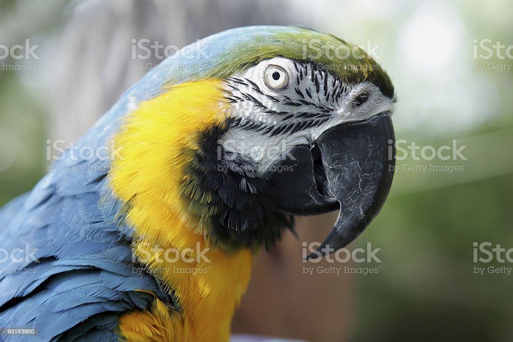 Mr. Parrot royalty-free stock photo