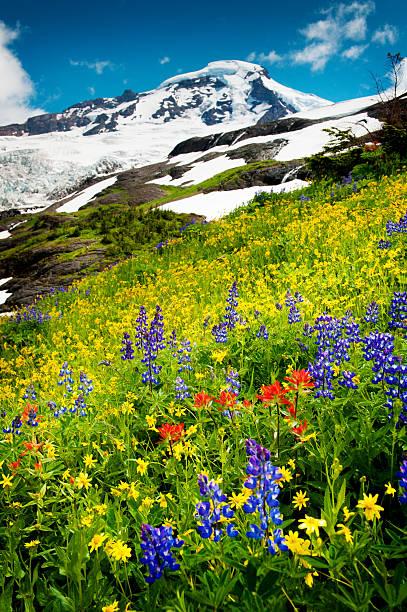 Mt. Baker, Washington. stock photo