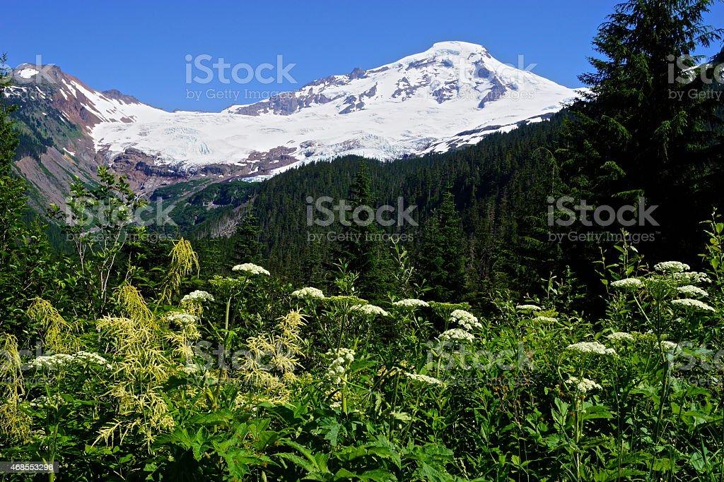 Mt. Baker Weeds stock photo