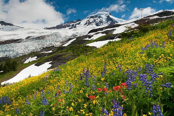 Mt. Baker Wildflowers stock photo