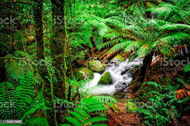 Photo of Mt. Donna Buang Rainforest Gallery