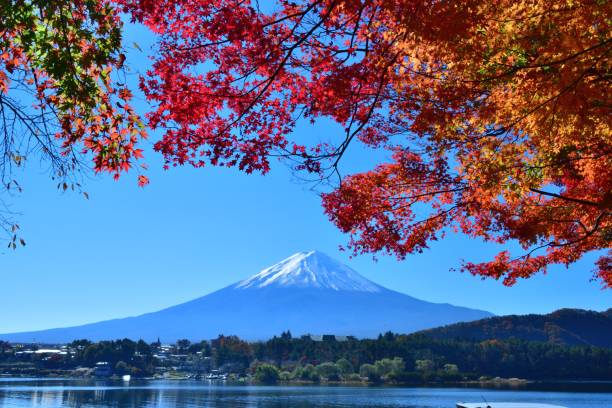 Mt Fuji and Autumn Leaf Color in Fuji Five Lakes Region, Japan Lake Kawaguchi is famous for its view of Mt Fuji and beautiful autumn foliage in November. Here are photos taken around Lake kawaguchi, one of the Fuji Five Lakes. Lake Kawaguchi is a part of Fuji-Hakone-Izu National Park. Mt Fuji is designated as UNESCO World Heritage site. lake kawaguchi stock pictures, royalty-free photos & images