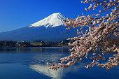 桜、富士山、lake Kawaguchiko