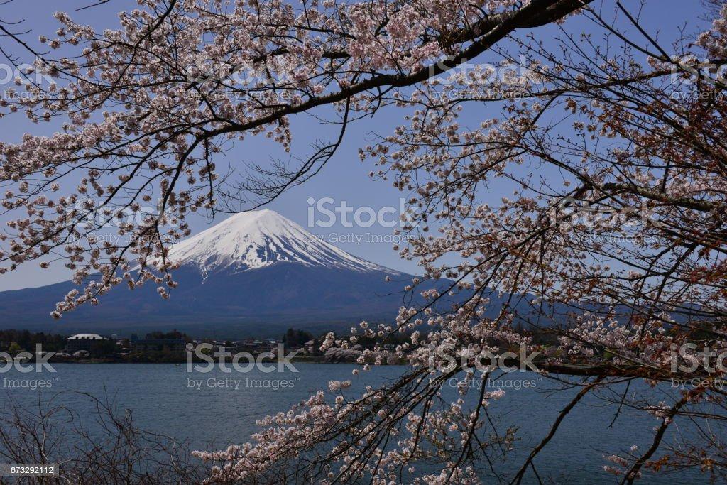 Mt Fuji and Cherry Blossom at Lake Kawaguchi royalty-free stock photo