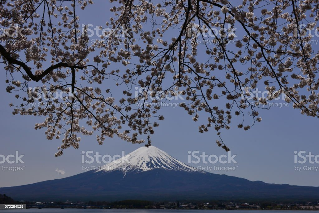 Mt Fuji and Cherry Blossom at Lake Kawaguchi royalty-free stock photo
