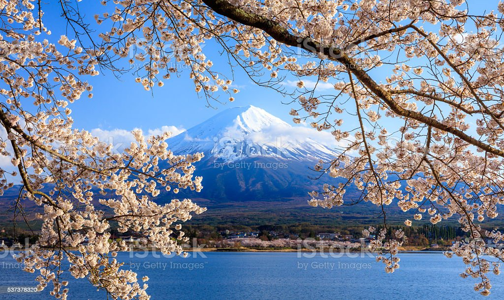 Mt. Fuji and Cherry Blossom at lake Kawaguchiko, Japan stock photo
