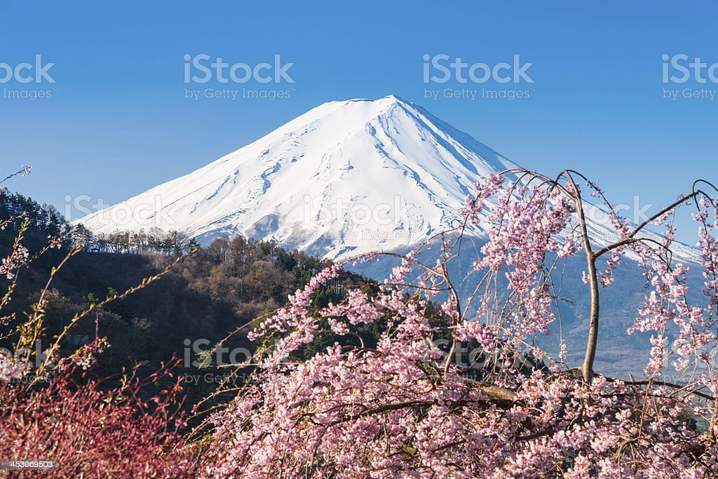 Mt Fuji and Cherry Blossom at lake Kawaguchiko stock photo