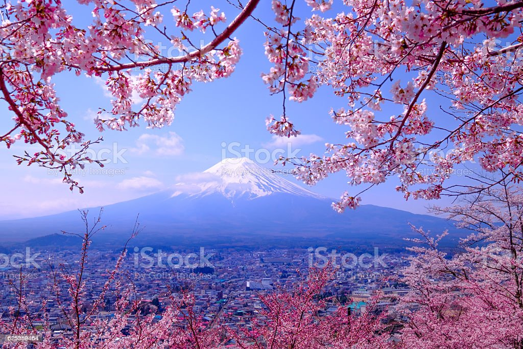 Mt Fuji and Cherry Blossom  in Japan Spring Season stock photo