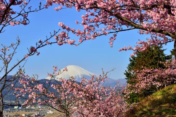 mont fuji et fleur de cerisier  - paysage mois de mars photos et images de collection