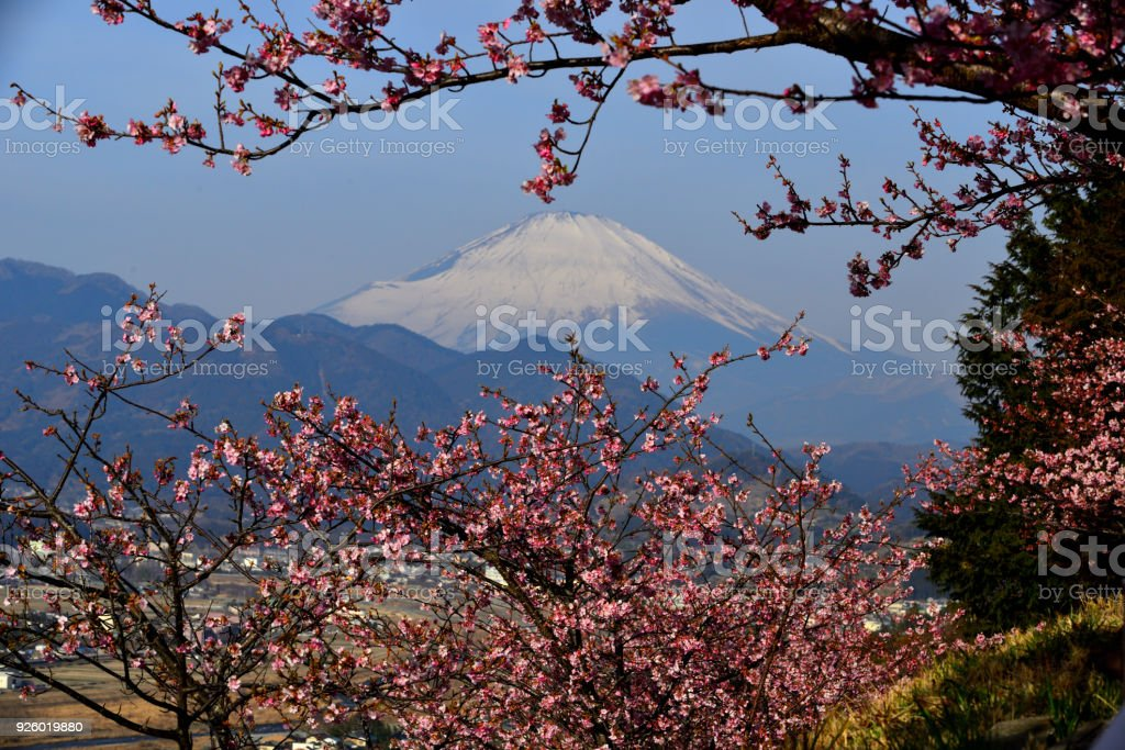 Mt Fuji And Cherry Blossom Stock Photo & More Pictures of Beauty