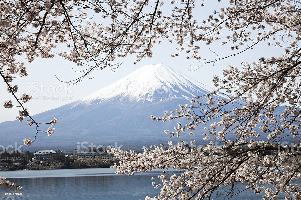 Mt. Fuji and cherry blossoms in spring royalty-free stock photo