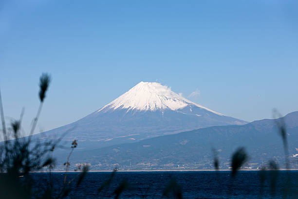 Mt. Fuji and tall grass in the foreground stock photo