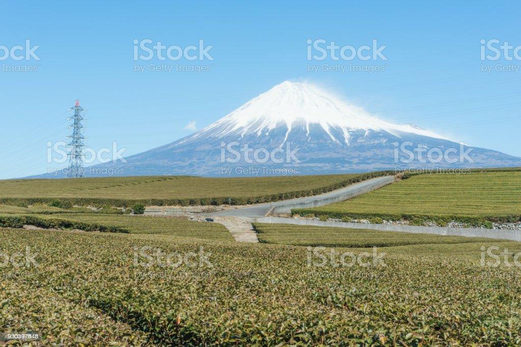 富士山と茶畑 ストックフォト
