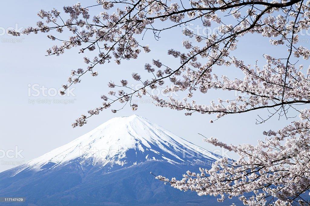 Mt Fuji & Cherry Blossoms royalty-free stock photo