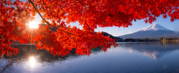 mt fuji in autumn view from lake kawaguchiko - japan stock photos and pictures