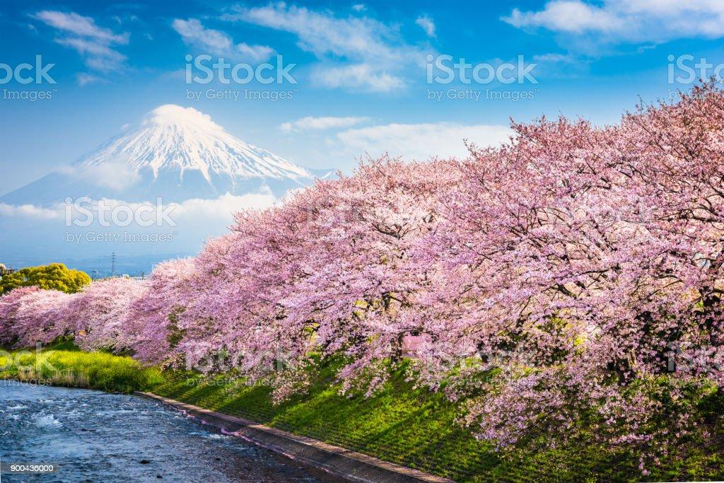 春の富士山 - アジア大陸のロイヤリティフリーストックフォト