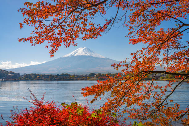 Mt. Fuji, Japan in Autumn Season Mt. Fuji, Japan on Lake Kawaguchi with autumn foliage. lake kawaguchi stock pictures, royalty-free photos & images