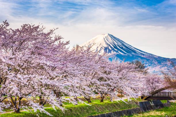 Mt. fuji Japan in Spring Mt. fuji Japan in Spring from the shore of Kawaguchi Lake. lake kawaguchi stock pictures, royalty-free photos & images