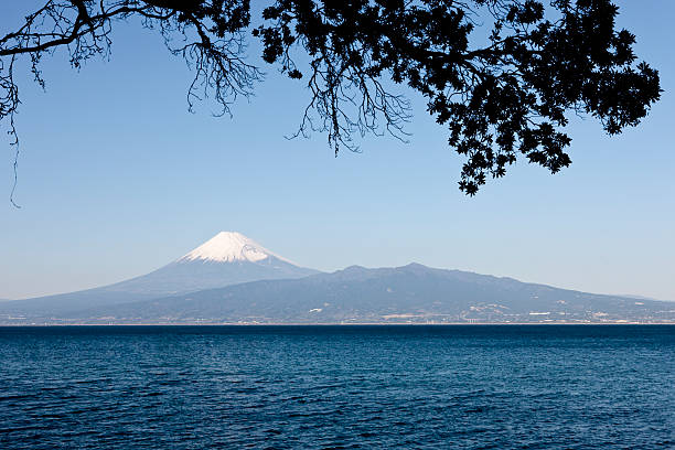 Mt. Fuji under and overhanging branch stock photo