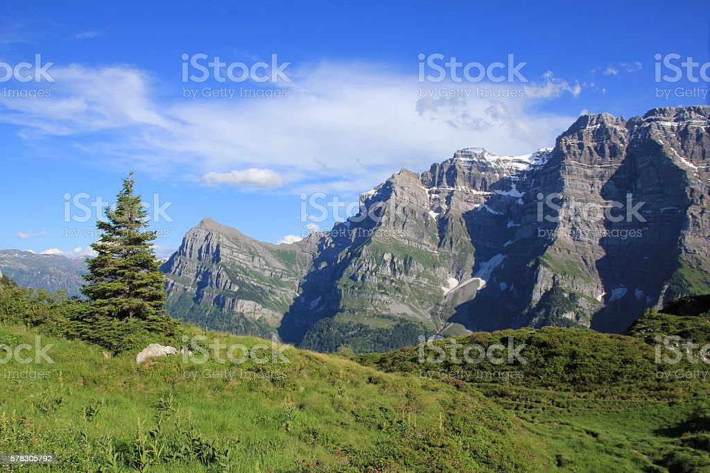Mt Glarnisch and fir, view from Obere Scheiterboden stock photo