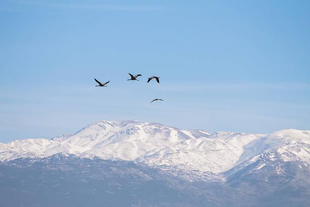 Mt Hermon, Israel stock photo