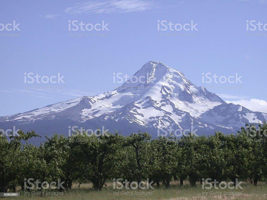Mt. Hood in Oregon royalty-free stock photo