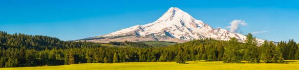 Mt Hood snowy peak overlooking pine forest meadows panorama Oregon stock photo