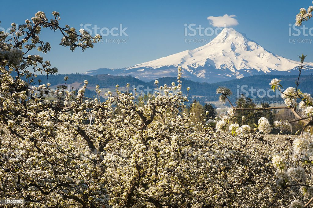 Mt Hood Vally and apple orchards stock photo
