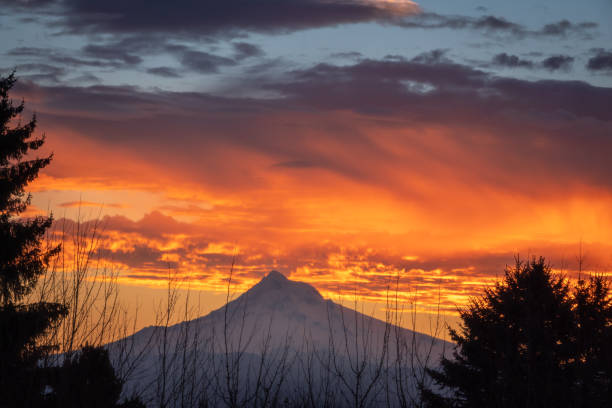 Mt Hood with colorful clouds behind the trees at winter morning stock photo