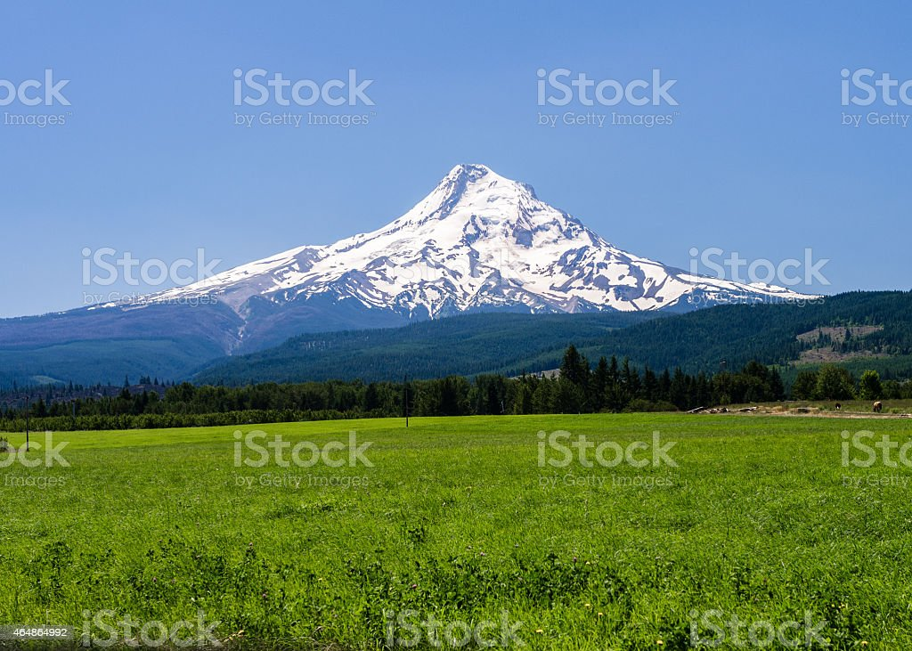 Mt Hood With Pasture - 006 stock photo