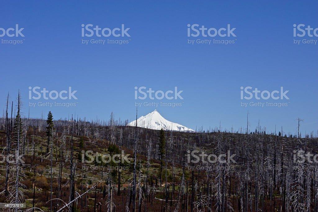 Mt. Jefferson View stock photo