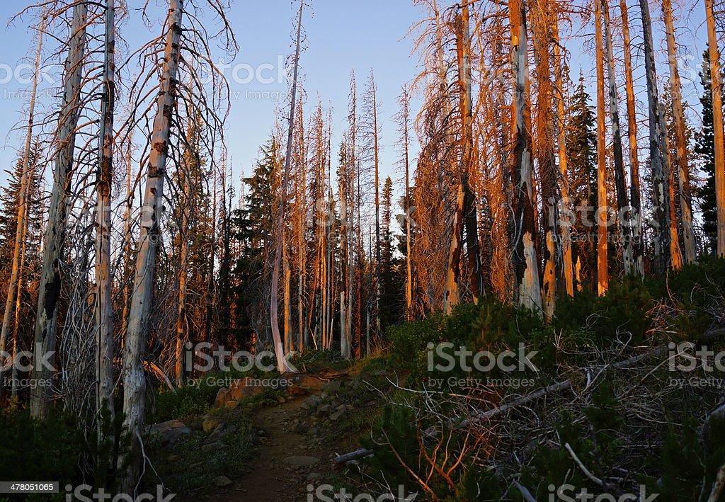 Mt. Jefferson Wilderness royalty-free stock photo