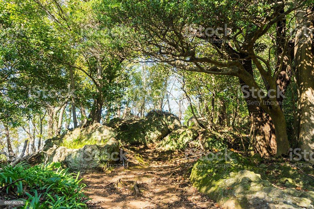 Mt. Kanuki hiking route – Foto