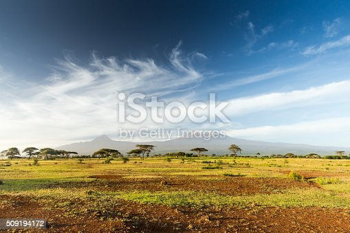 istock Mt Kilimanjaro & Mawenzi peak and Acacia - morning 509194172