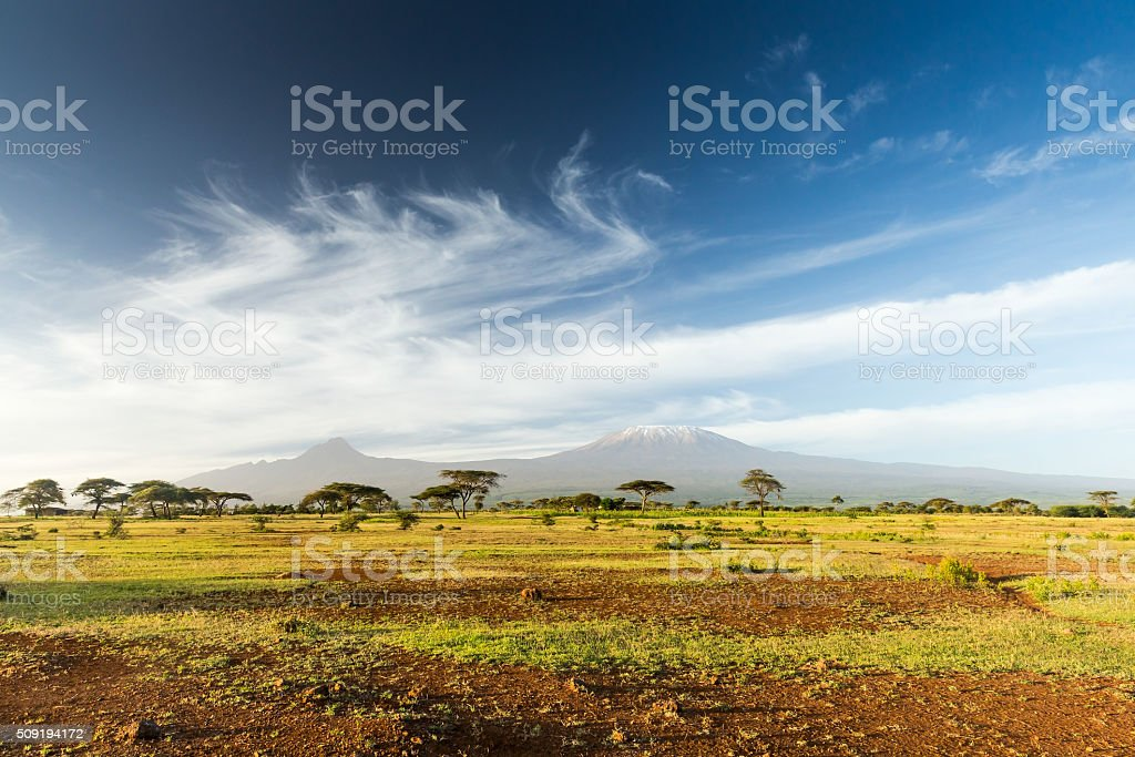 Mt Kilimanjaro & Mawenzi peak and Acacia - morning stock photo