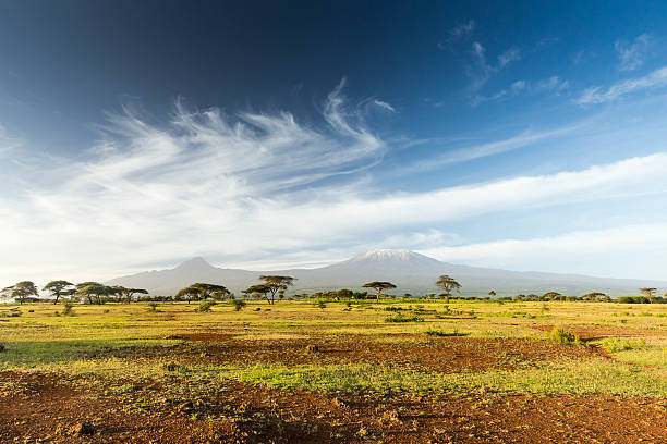 mt kilimanjaro & mawenzi peak and acacia - morning - africa 個照片及圖片檔