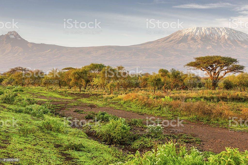 Mt Kilimanjaro & Mawenzi peak and Acacia - morning stock photo