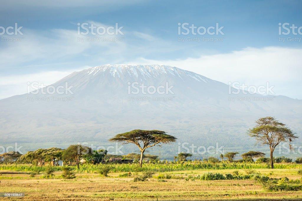 Mt Kilimanjaro and Acacia - in the morning stock photo