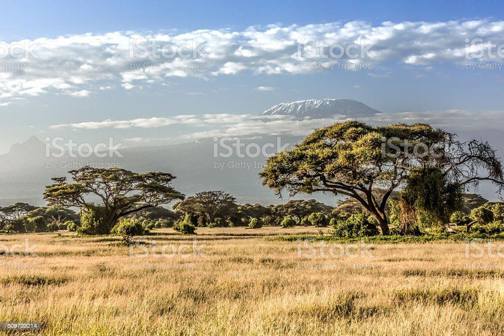 Mont Kilimandjaro, nuages et Acacia – le matin - Photo
