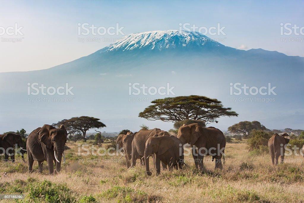 Mt Kilimanjaro from Amboseli National Park, Kenya stock photo