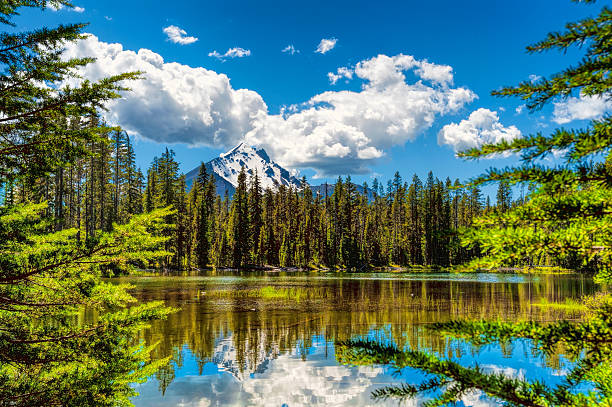 Mt. Mcloughlin reflecting in marsh waters stock photo