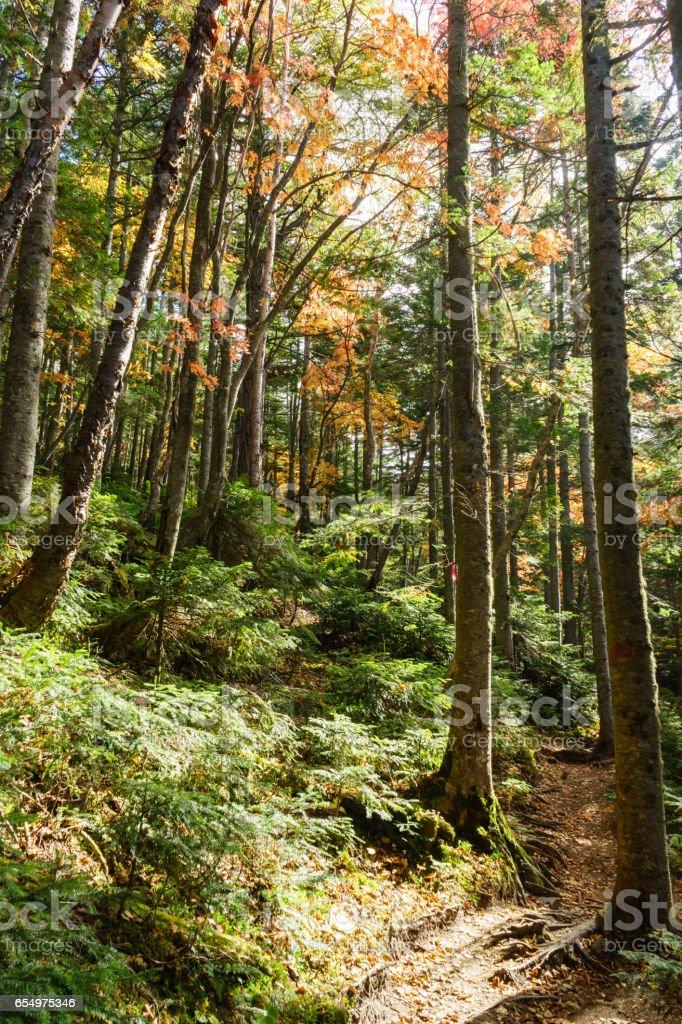 日光 - 白根山秋のトレッキング ストックフォト