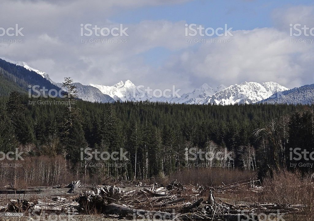 Mt. Olympus/Hoh River Valley stock photo