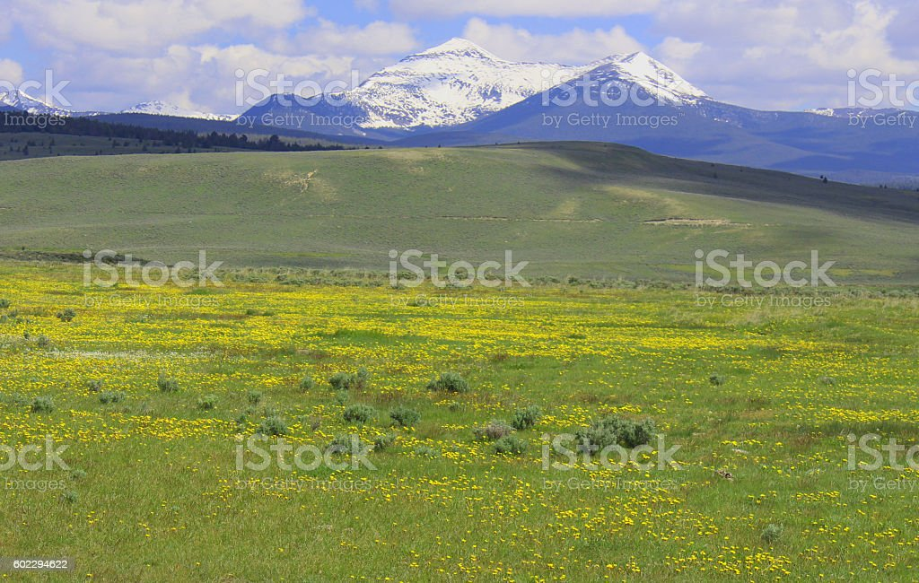 Mt. Pintler, Montana stock photo