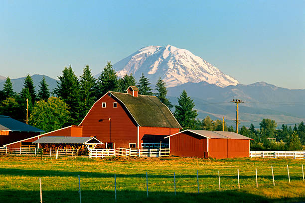 Mt Rainier and Barn  pierce county washington state stock pictures, royalty-free photos & images