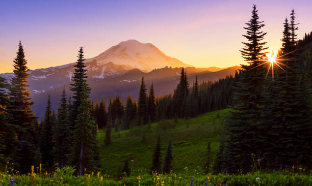 Mt Rainier at Dusk - foto stock